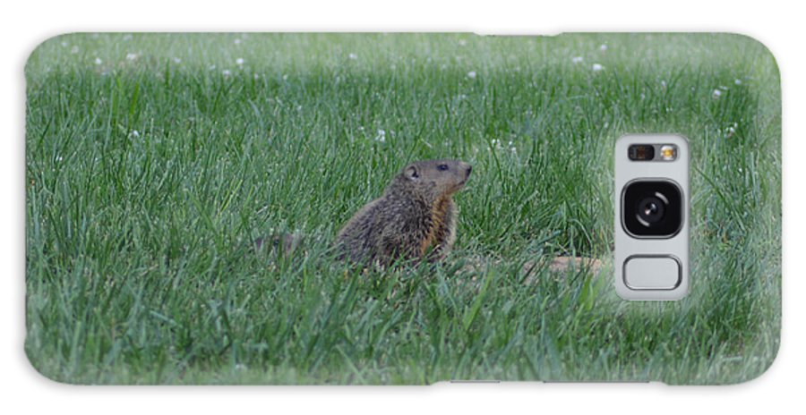 Groundhog Galaxy S8 Case featuring the photograph Young Groundhog by Belinda Stucki