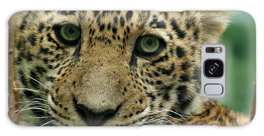 Jaguar Galaxy S8 Case featuring the photograph Young Jaguar by Sandy Keeton