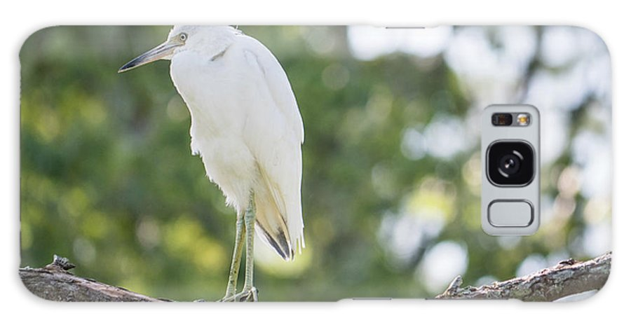Little Blue Heron Galaxy S8 Case featuring the photograph Young Little Blue Heron by David Ramage