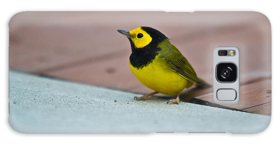 Cove Galaxy S8 Case featuring the photograph Young Male Hooded Warbler 1 by Douglas Barnett
