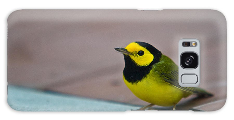 Cove Galaxy S8 Case featuring the photograph Young Male Hooded Warbler 3 by Douglas Barnett