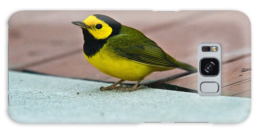 Cove Galaxy S8 Case featuring the photograph Young Male Hooded Warbler 5 by Douglas Barnett