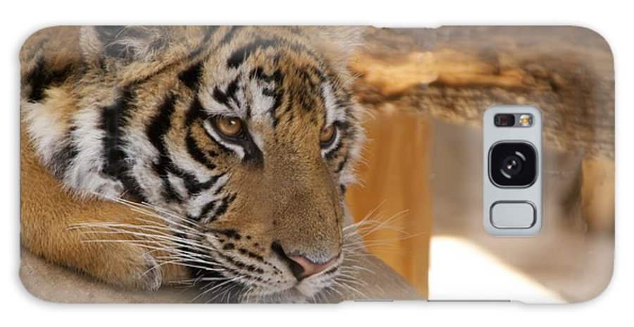Tiger Galaxy Case featuring the photograph Young Tiger by Toni Berry