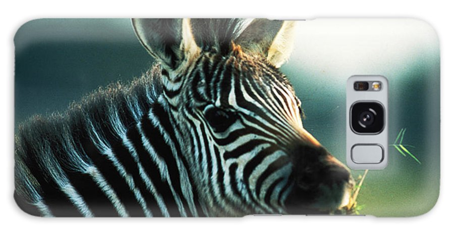 Young Zebra Galaxy S8 Case featuring the photograph Young Zebra by Carl Purcell
