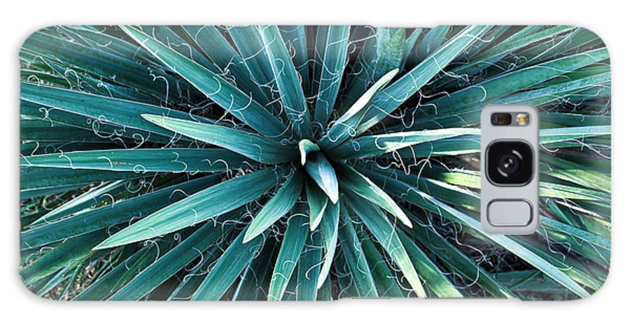 Yucca Galaxy Case featuring the photograph Yucca Plant Detail by Douglas Barnett