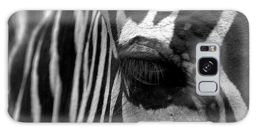 Zebra Galaxy S8 Case featuring the photograph Zebra In Black And White by Denise Jenks