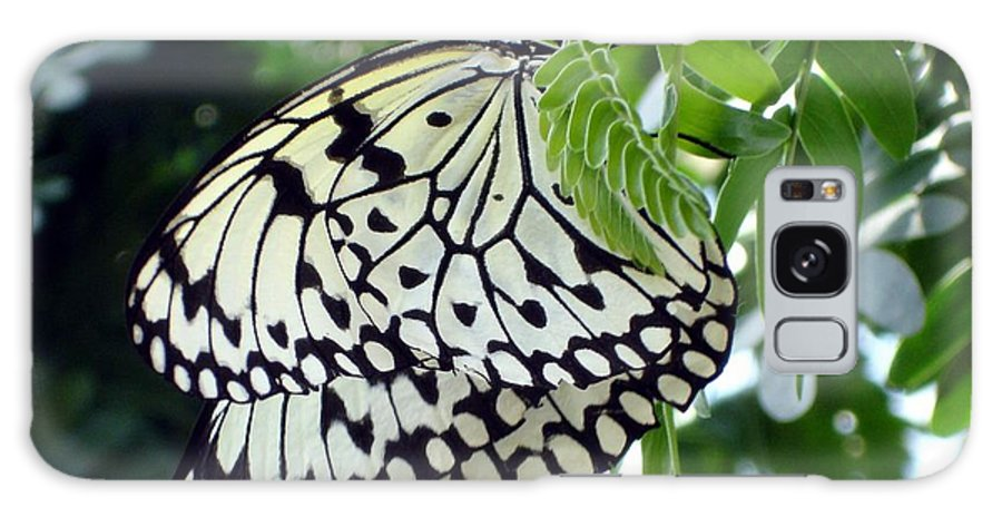 Butterfly Galaxy Case featuring the photograph Zebra In Disguise by Shelley Jones