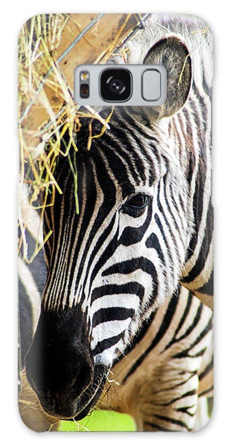 Zebra Galaxy S8 Case featuring the mixed media Zebra Zee by Amitabh Dayal