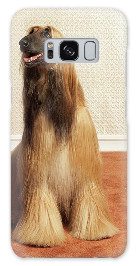 Pets Galaxy Case featuring the photograph Afghan Hound Sitting In Room by Dtp