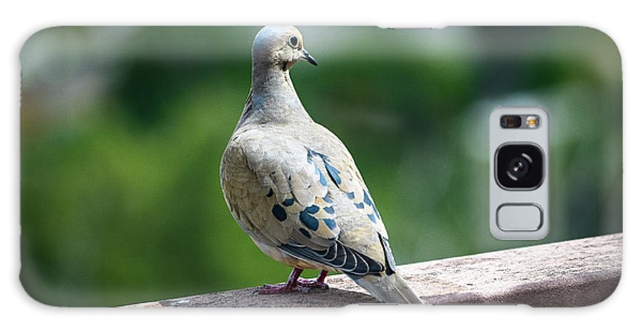 Mourning Dove Galaxy S8 Case featuring the photograph Dove On The Deck by Dawn Hough Sebaugh