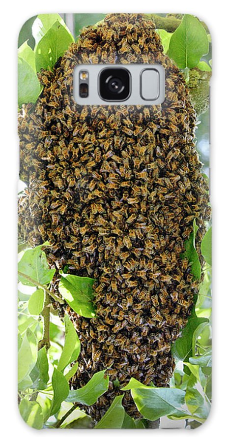 Honey Bees Swarming In A Plum Tree In The Cotswolds Galaxy Case featuring the photograph 1161-1226 by Robert Harding Picture Library