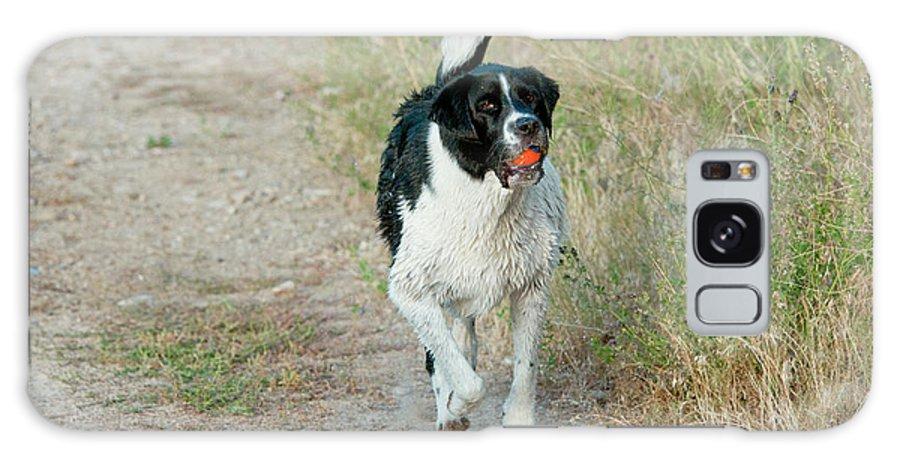 Black And White Dog Galaxy Case featuring the photograph Borador Border Collielabrador Retriever by William Mullins