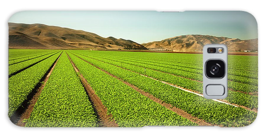 Environmental Conservation Galaxy Case featuring the photograph Crops Grow On Fertile Farm Land by Pgiam