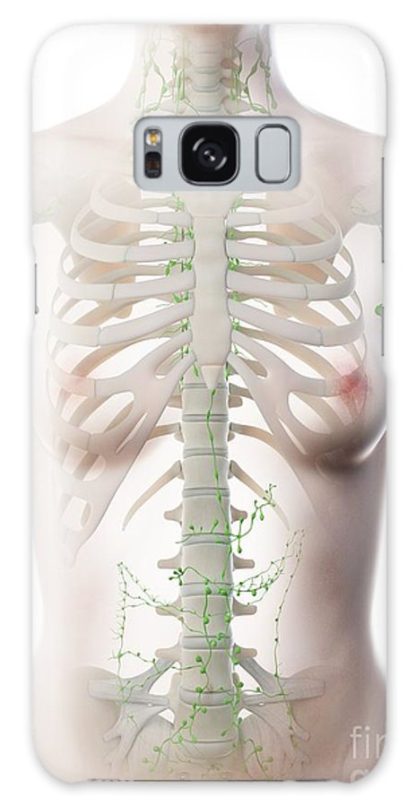 3d Galaxy Case featuring the photograph Female Thoracic Lymph Nodes by Sebastian Kaulitzki/science Photo Library