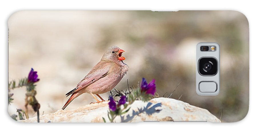 Small Galaxy S8 Case featuring the photograph A Male Trumpeter Finch Bucanetes by Andrew M. Allport