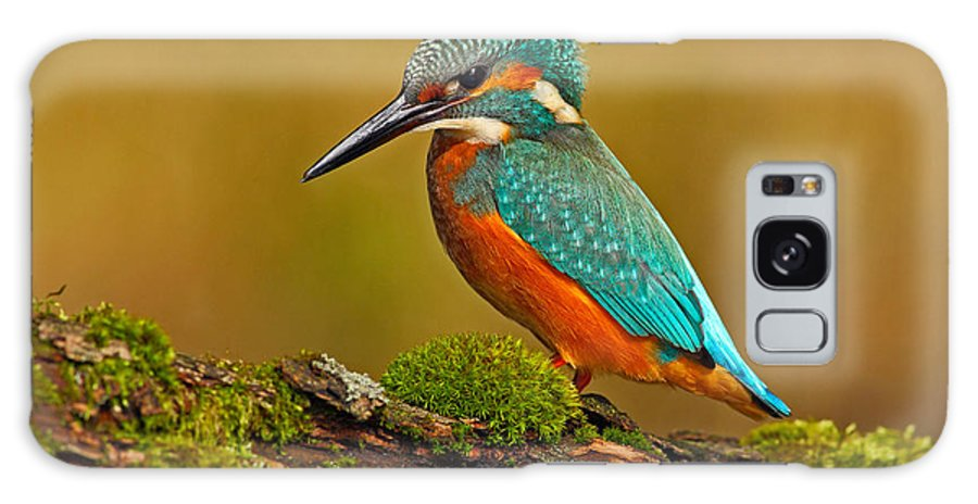 Feather Galaxy S8 Case featuring the photograph Beautiful Kingfisher With Clear Green by Ondrej Prosicky