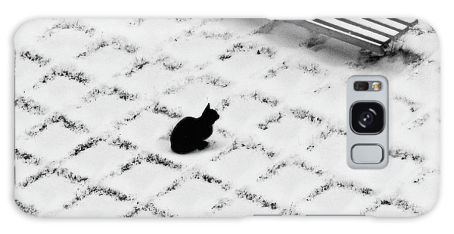 Pets Galaxy Case featuring the photograph Black Cat Contemplating Bench by Photo By Marianna Armata