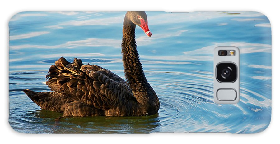 Black Swan Galaxy Case featuring the photograph Black Swan Making Ripples by Zayne Diamond Photographic