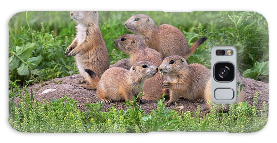 Adult And Young Galaxy Case featuring the photograph Black-tailed Prairie Dog Family At Den by Ivan Kuzmin