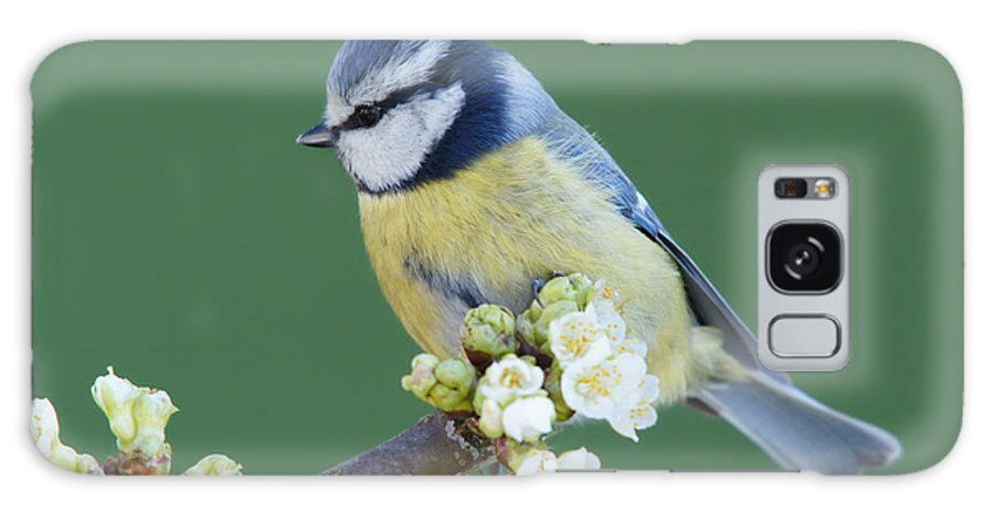 Songbird Galaxy Case featuring the photograph Bluetit On A Blossoming Twig by Schnuddel