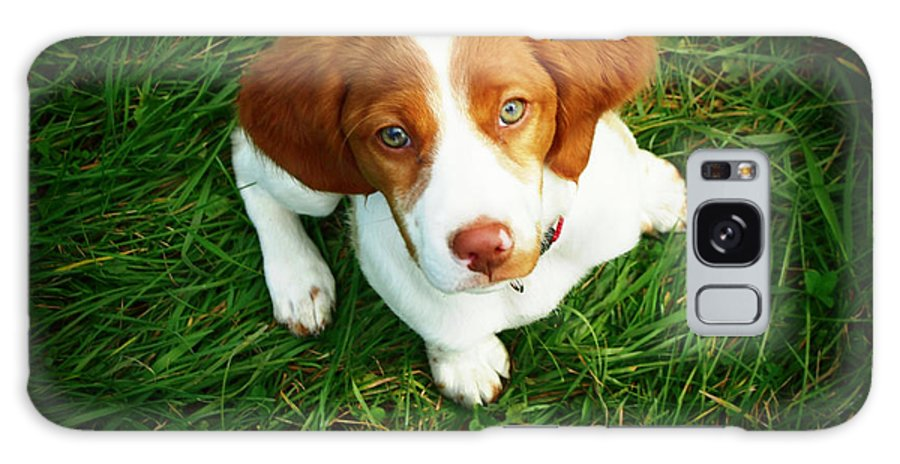 Pets Galaxy Case featuring the photograph Brittany Spaniel Puppy by Meredith Winn Photography