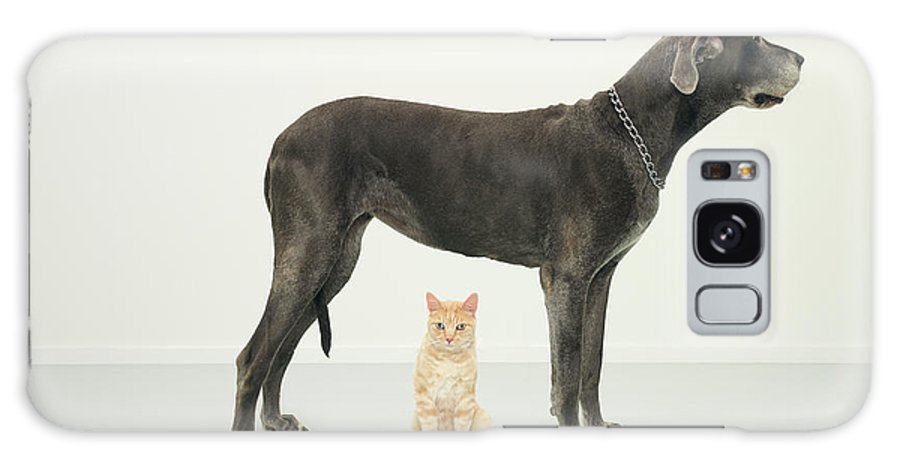 White Background Galaxy Case featuring the photograph Cat Sitting Beneath Great Dane by Oppenheim Bernhard
