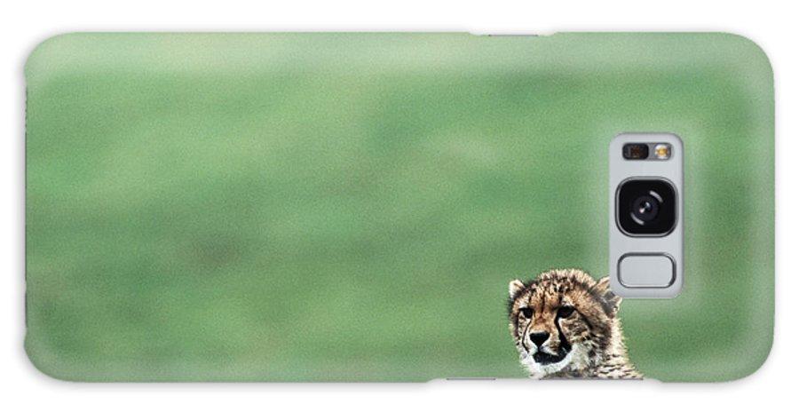 Focus Galaxy Case featuring the photograph Cheetah Acinonyx Jubatus, United States by Mark Newman