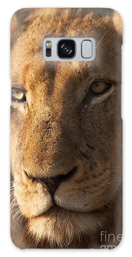 Big Galaxy S8 Case featuring the photograph Close-up Of A Young Male Lion Panthera by Johan Swanepoel