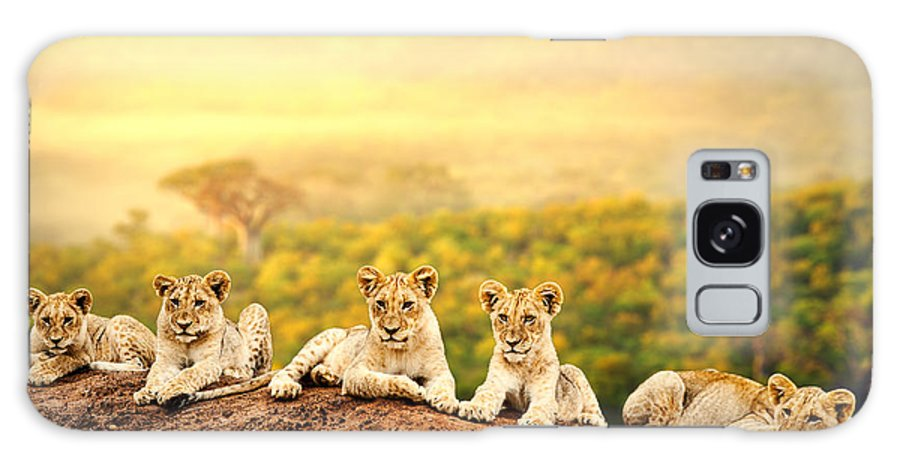 Small Galaxy S8 Case featuring the photograph Close Up Of Lion Cubs Laying Together by Karelnoppe