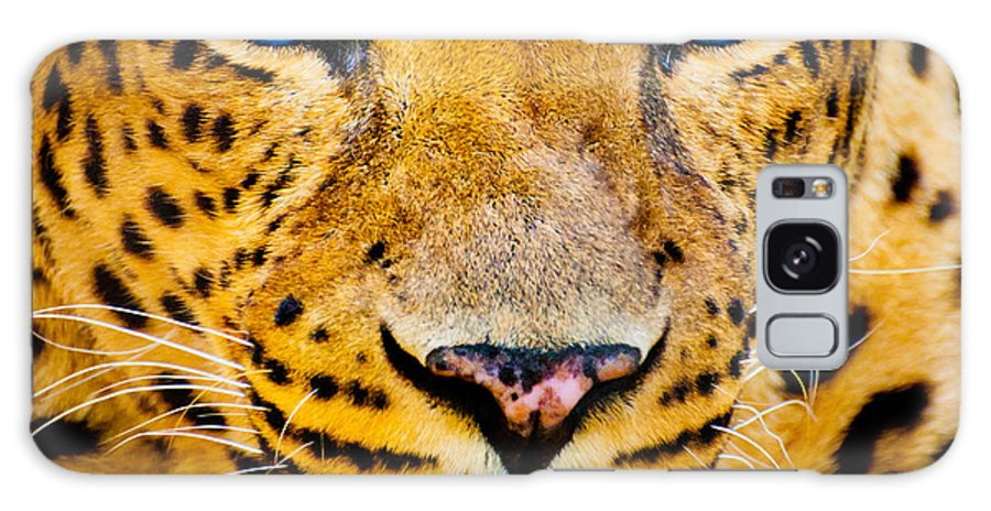 Fur Galaxy S8 Case featuring the photograph Close Up Portrait Of Leopard With by Rob Hainer