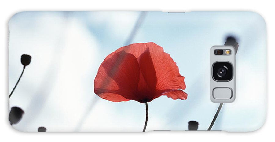 Outdoors Galaxy Case featuring the photograph Common Poppy Papaver Rhoeas, Close Up by Dougal Waters