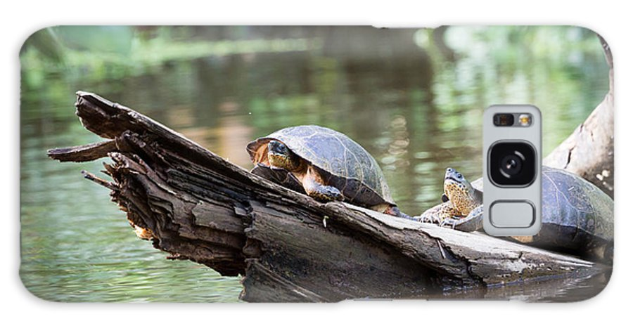 Turtles Galaxy S8 Case featuring the photograph Costa Rica, Tortuguero National Park by Ronnybas Frimages