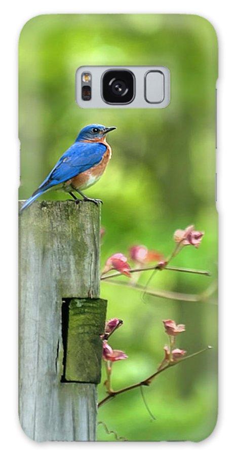 Bluebird Galaxy S8 Case featuring the photograph Eastern Bluebird by Christina Rollo