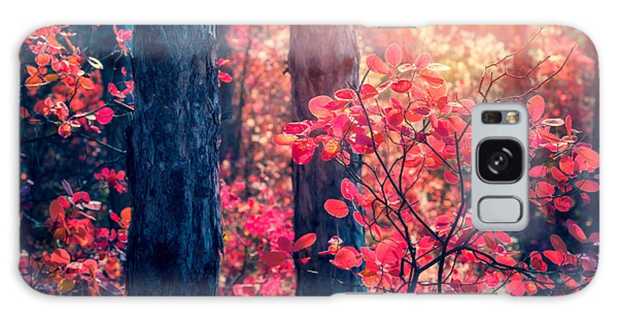 Magic Galaxy S8 Case featuring the photograph Fantastic Forest With Cotinus by Creative Travel Projects