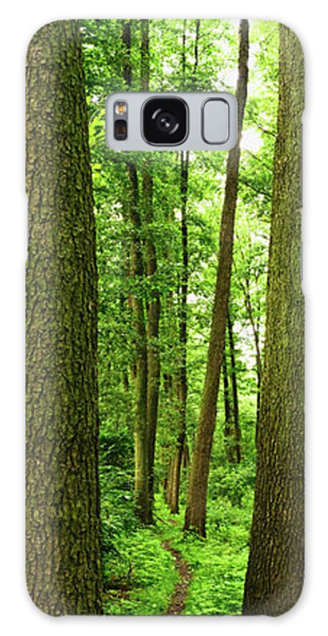 Scenics Galaxy Case featuring the photograph Footpath Between The Trees by Tomchat