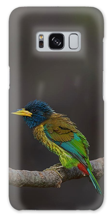 Bird Images For Print Galaxy S8 Case featuring the photograph Great Barbet by Uma Ganesh