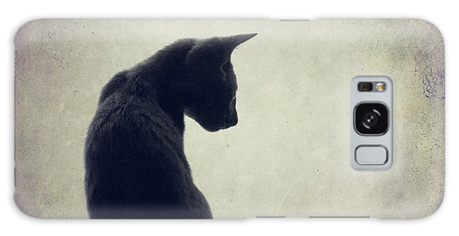 Animal Themes Galaxy Case featuring the photograph Grey Cat Sitting On Shelf by Christiana Stawski