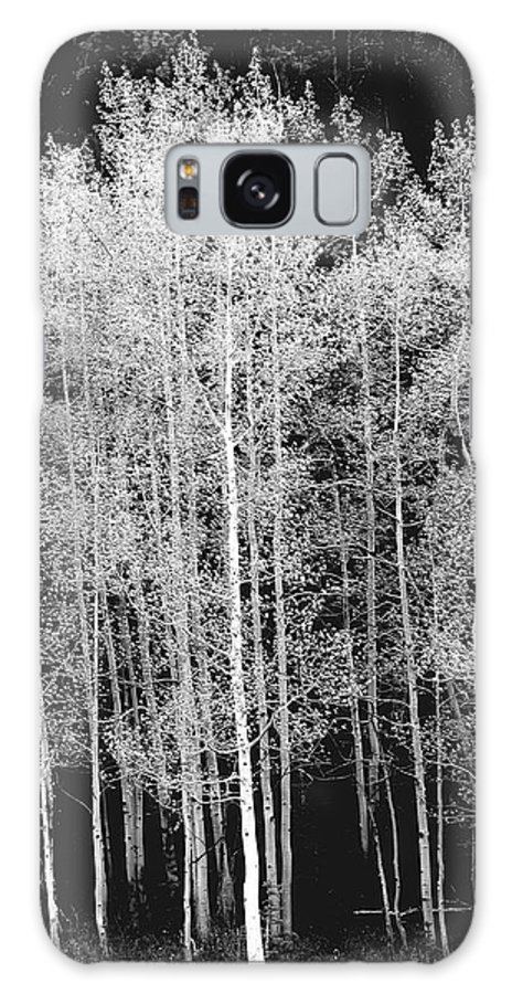Outdoors Galaxy Case featuring the photograph Grove Of Aspen Trees Populus by David Epperson