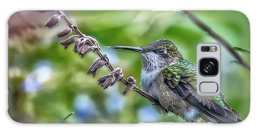 Dc Gardens 2016 Contest Galaxy Case featuring the photograph Hummer With Attitude by Tom Stovall Sr