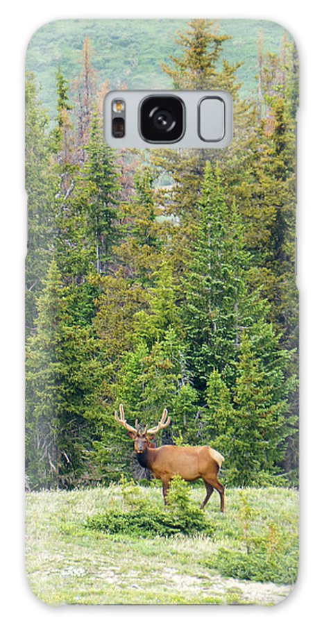 Rocky Galaxy S8 Case featuring the photograph I Am Elk 1 by Richard A Brown