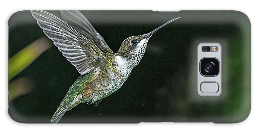 Hummingbirds Galaxy Case featuring the photograph In Flight by Tom Stovall Sr