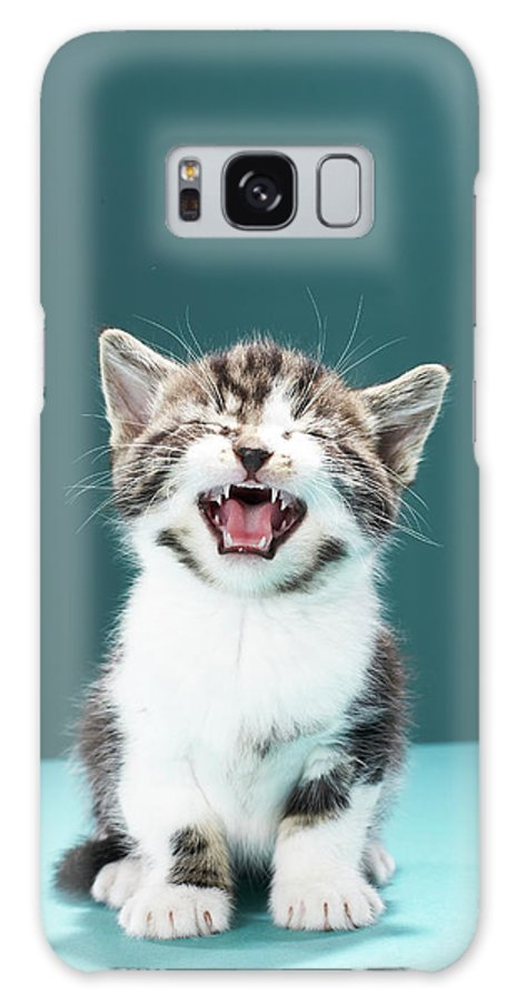 Pets Galaxy Case featuring the photograph Kitten Meowing by Martin Poole