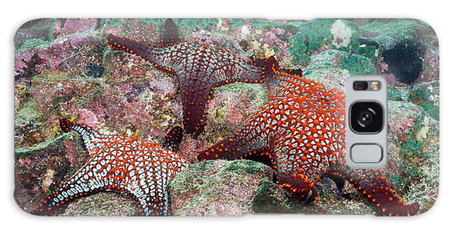 Knobby Starfish Galaxy Case featuring the photograph Knobby Starfish by Reinhard Dirscherl/science Photo Library