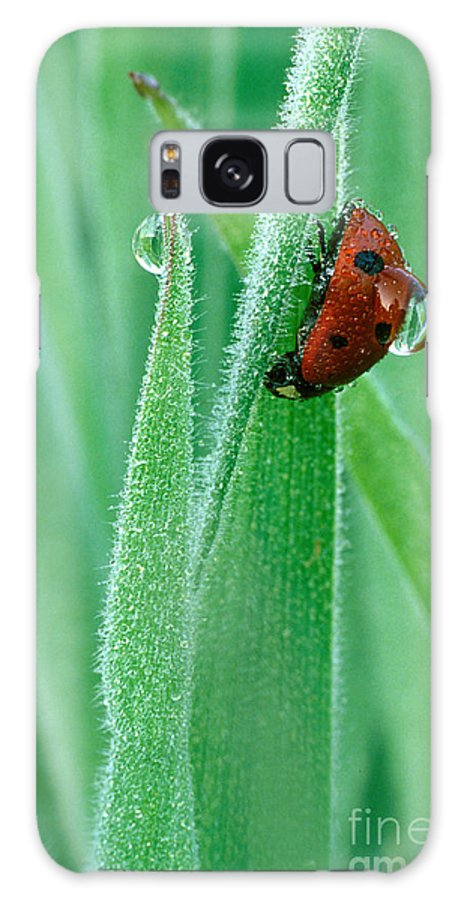 Drop Galaxy S8 Case featuring the photograph Ladybug With Large Dew Droplet On Back by Marc Parsons