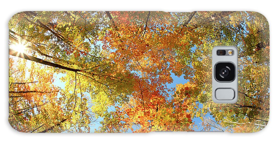 Canopy Galaxy Case featuring the photograph Langlade County Canopy by Todd Klassy