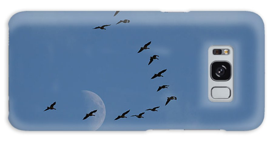 Branta Canadensis Galaxy S8 Case featuring the photograph Lesser Canada Geese, Migration Flight by Ken Archer