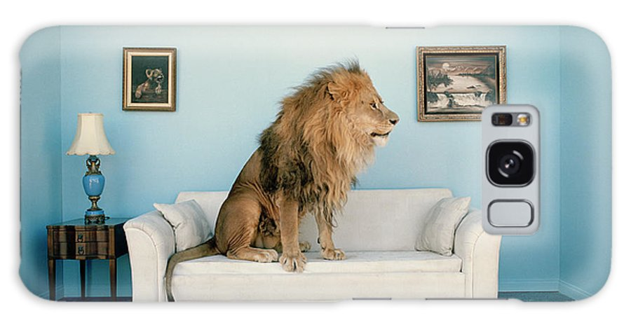 Pets Galaxy Case featuring the photograph Lion Sitting On Couch, Side View by Matthias Clamer