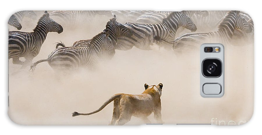 Big Galaxy S8 Case featuring the photograph Lioness Attack On A Zebra. National by Gudkov Andrey