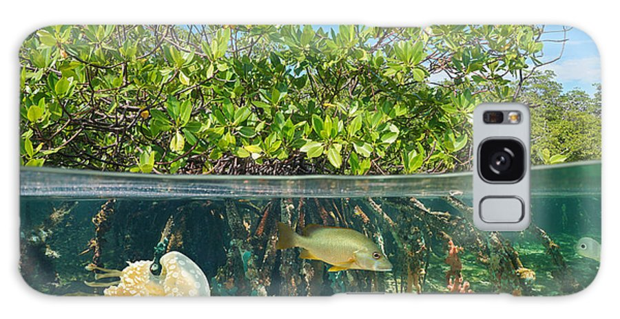 Habitat Galaxy S8 Case featuring the photograph Mangrove Above And Below Water Surface by Damsea