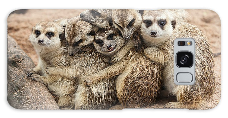 Small Galaxy Case featuring the photograph Meerkat Family Are Sunbathing by Nattanan726